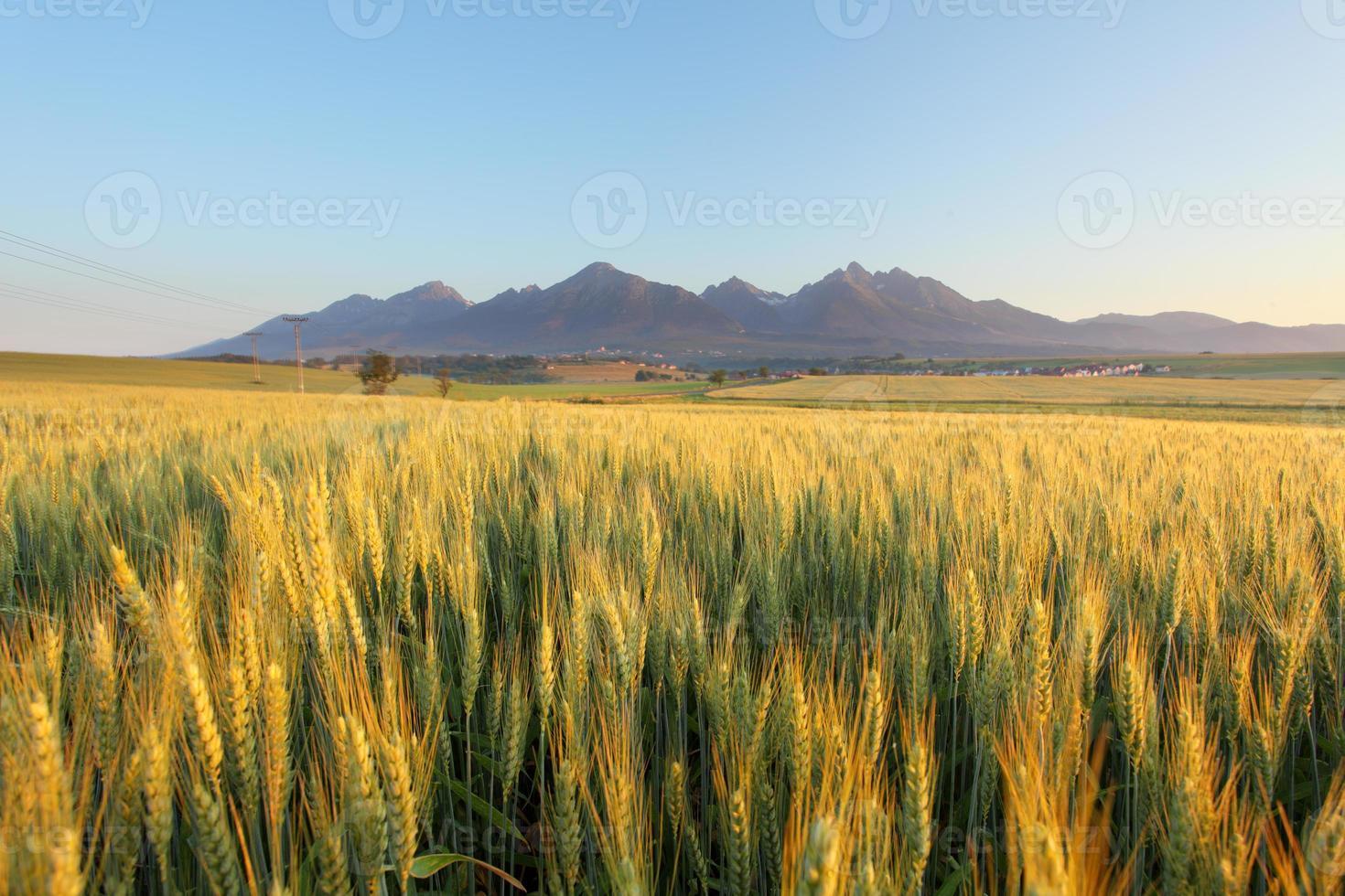 campo de trigo com caminho sob tatras foto
