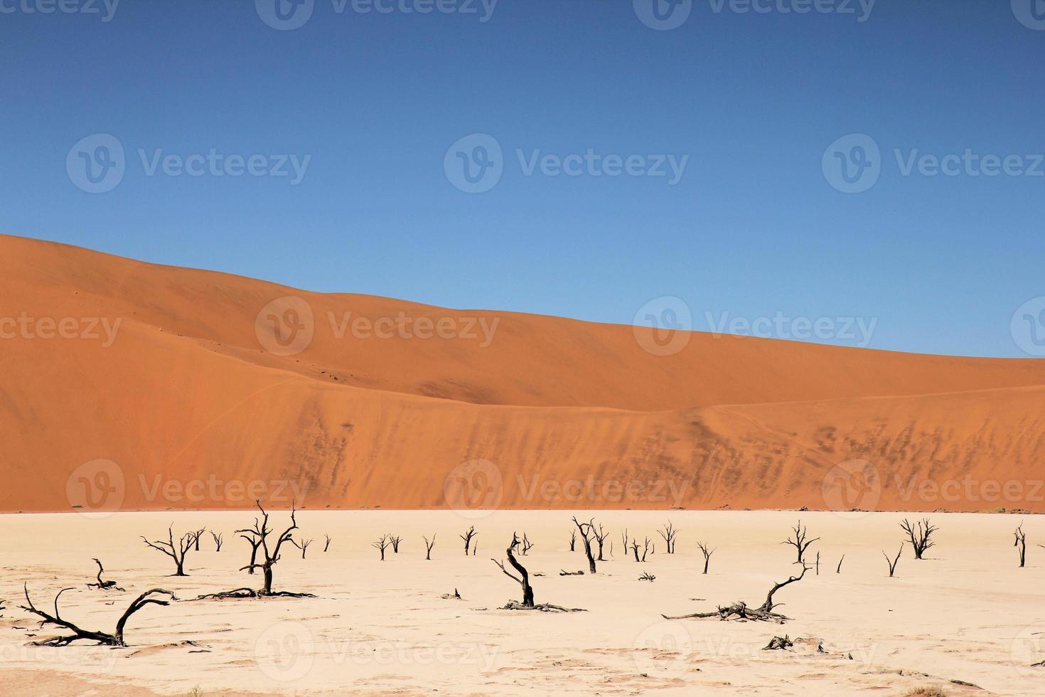 árvores de camelthorn em dead vlei foto