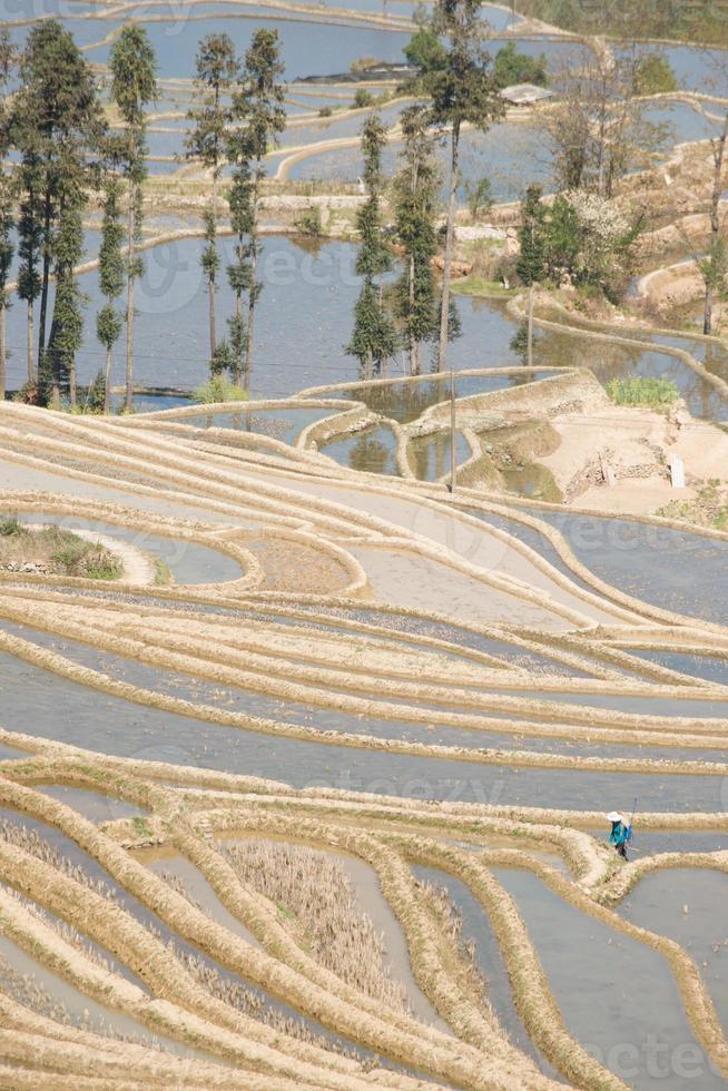 terraço de arroz yuanyang foto