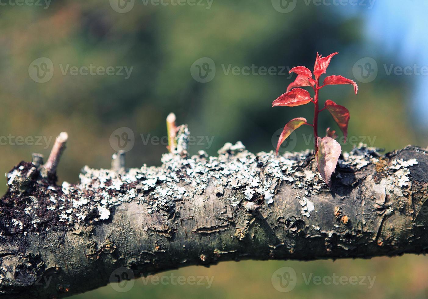 plantas brilhantes foto