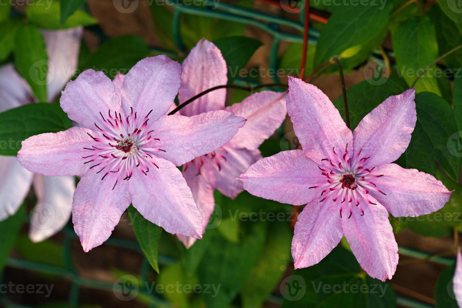 plantas de flores no jardim. foto