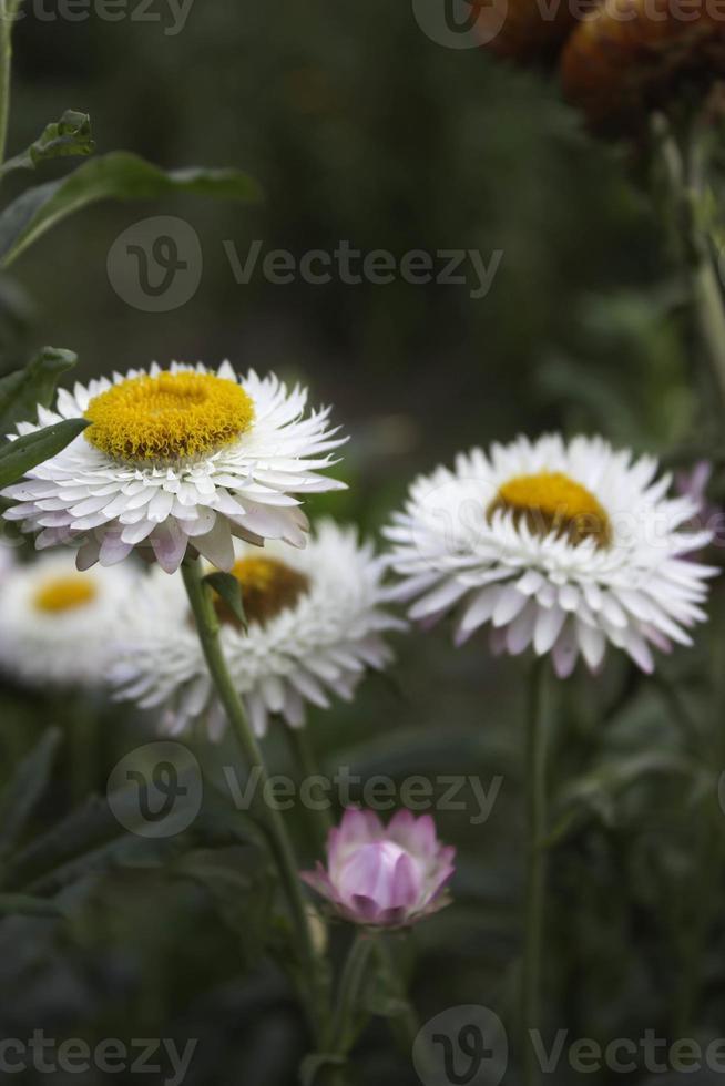flores de papel foto