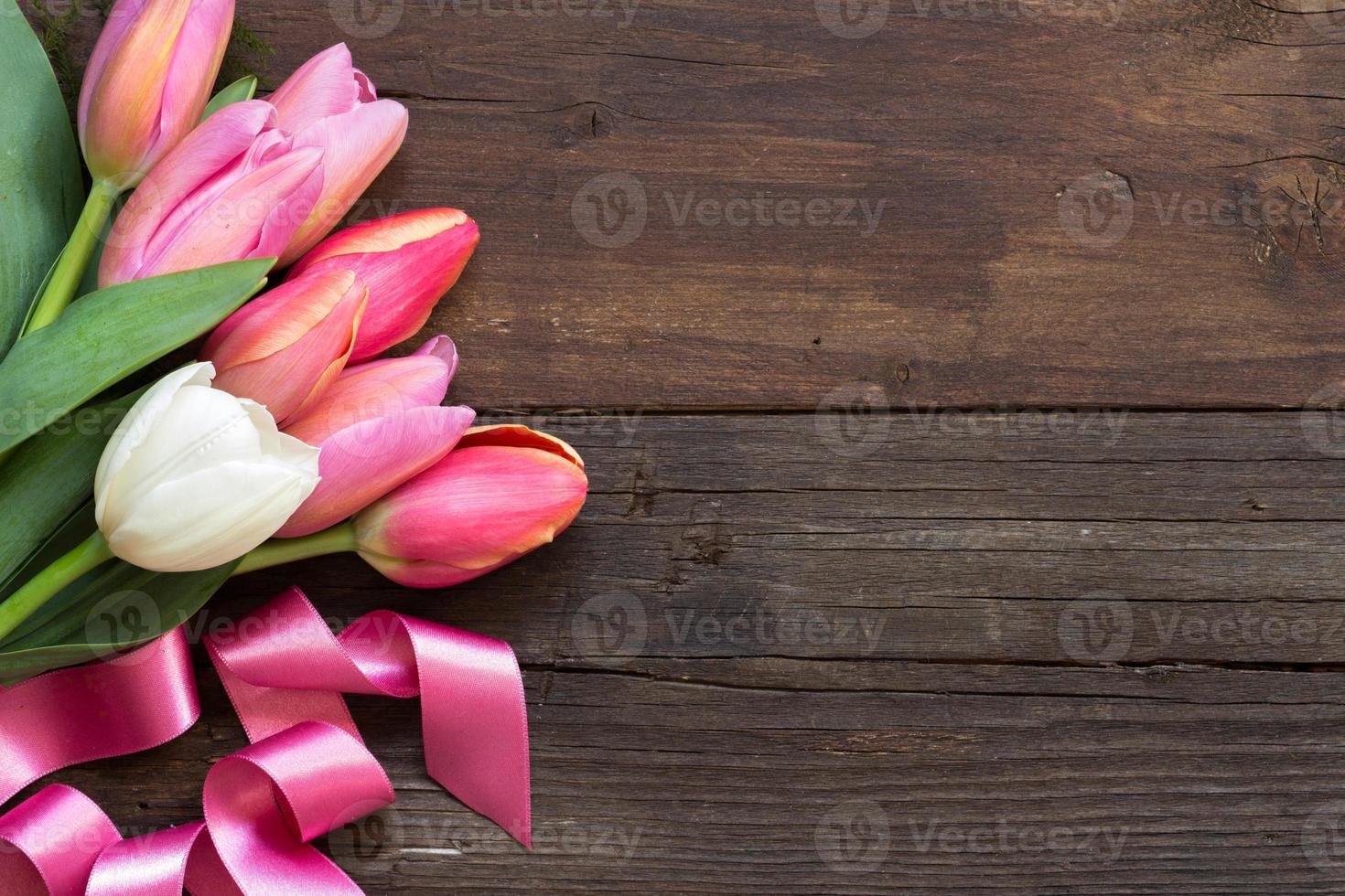 tulipas rosa e brancas foto