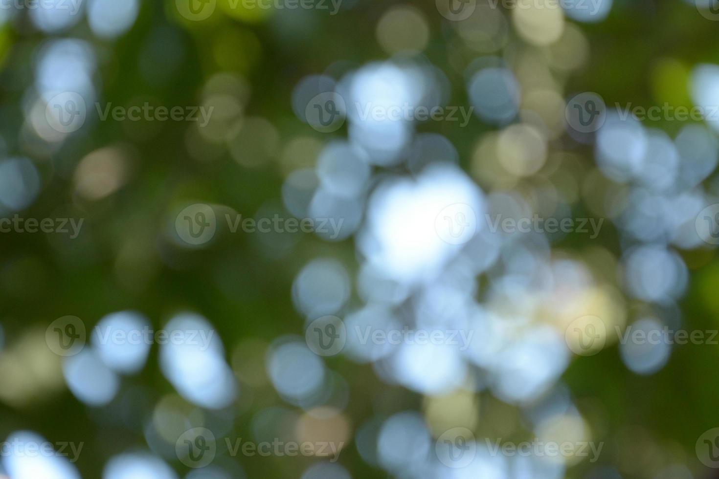 cor verde do fundo do bokeh foto