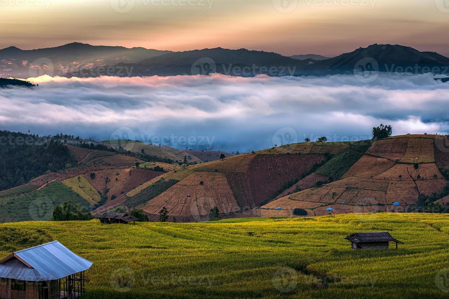 campo de arroz em socalcos foto