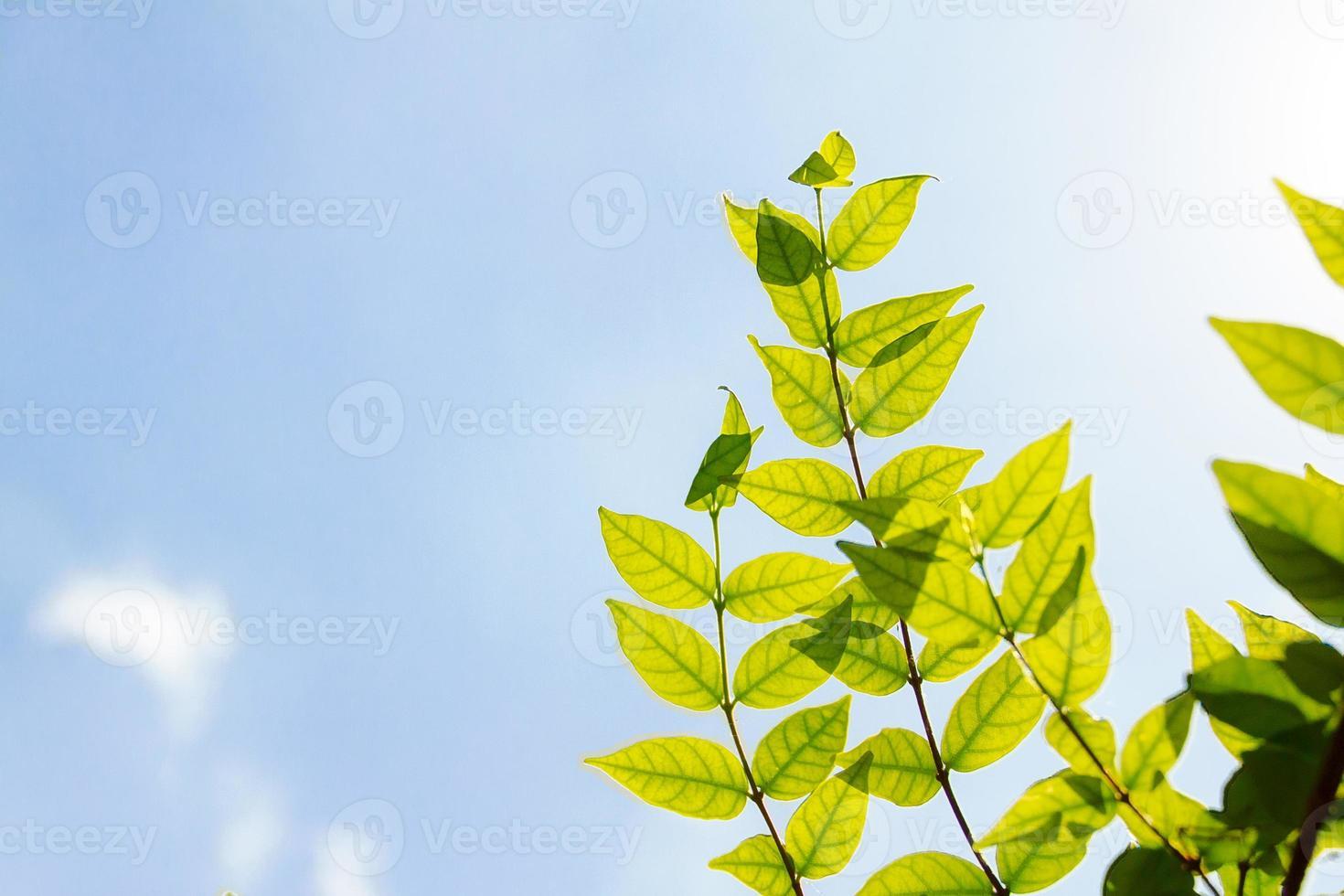 céu abstrato com a folha foto