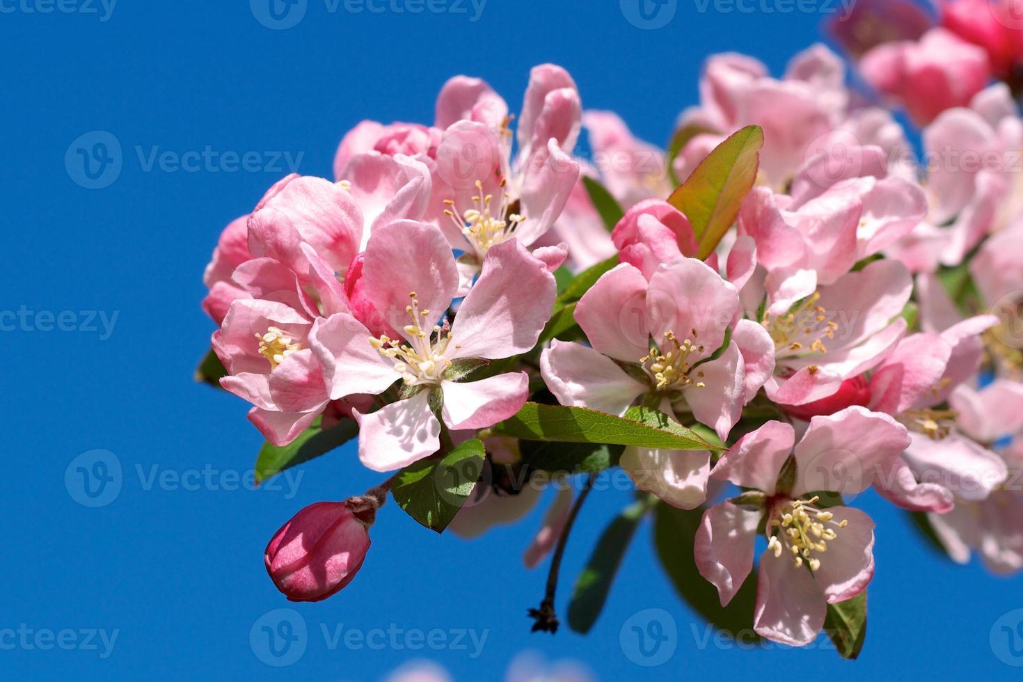 flores cor de rosa contra um céu azul foto