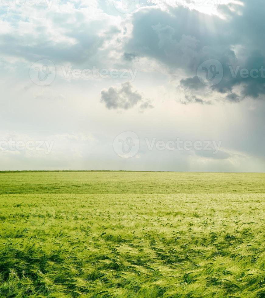 céu dramático sobre campo verde foto