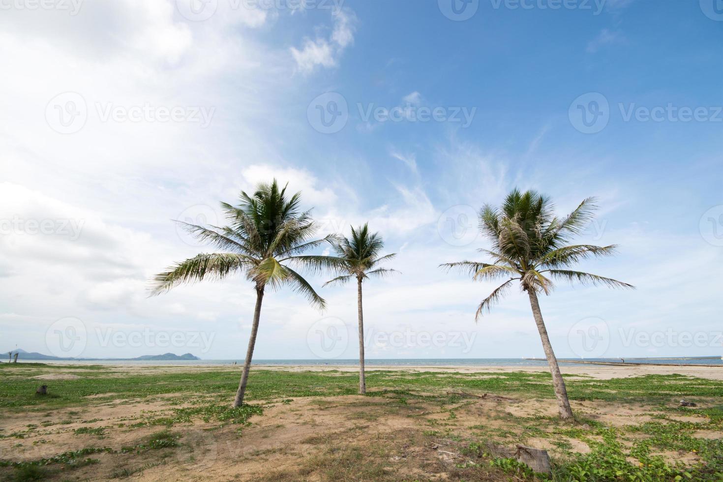 belas palmeiras no céu azul foto