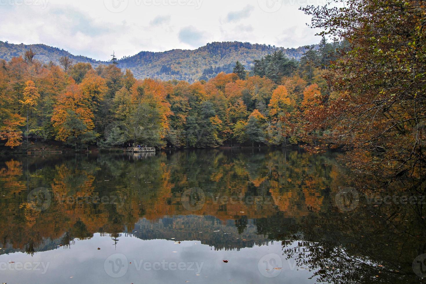 árvores refletidas no lago e no céu foto