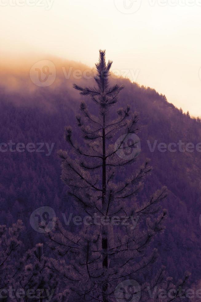 árvore no final do pôr do sol foto