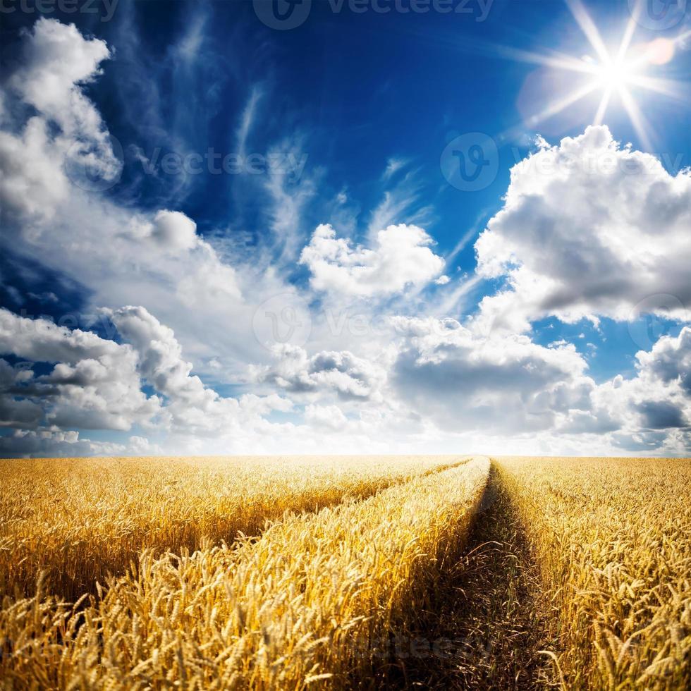 um campo de trigo dourado sob um céu azul nublado foto