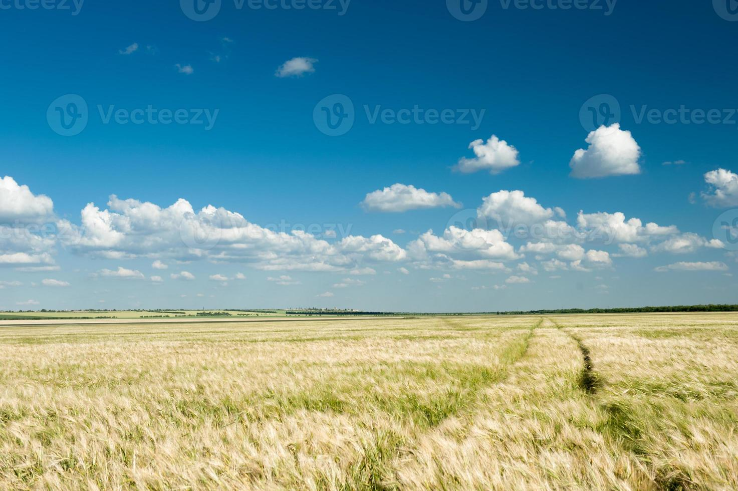 campo de trigo e céu azul paisagem de verão foto