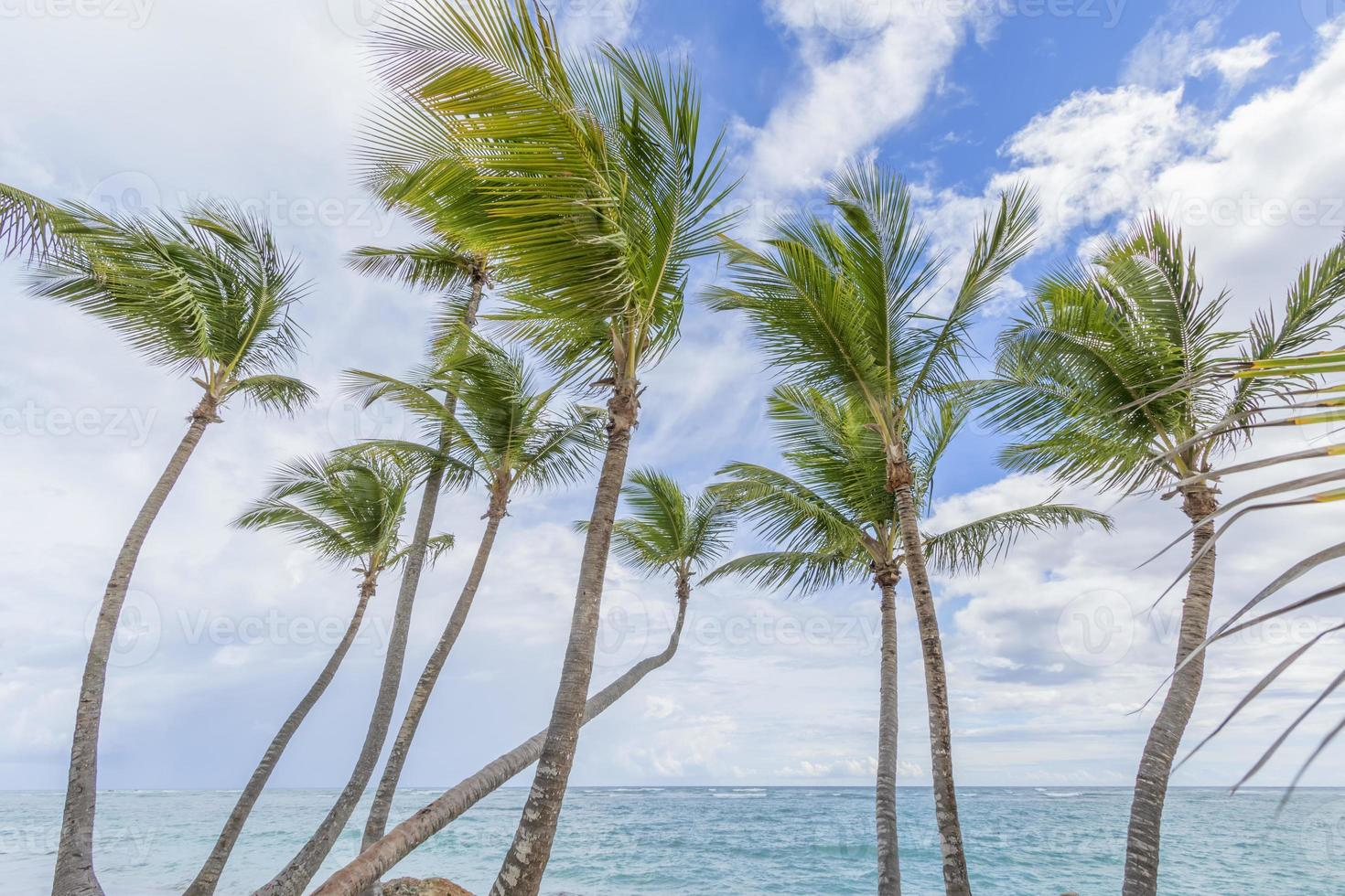 palmeiras na praia. foto