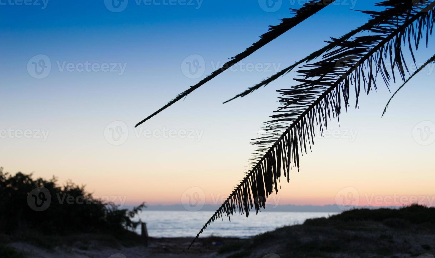 silhueta da palmeira na costa ao entardecer foto