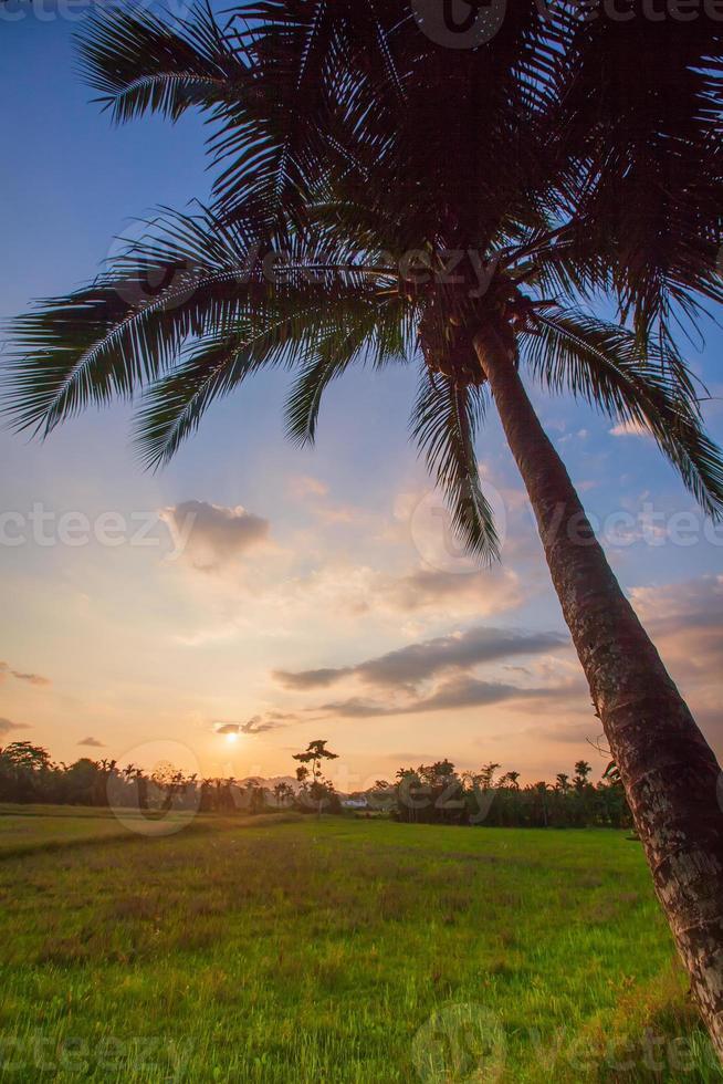 paisagem do pôr do sol com campo verde e palmeiras no sri lanka foto