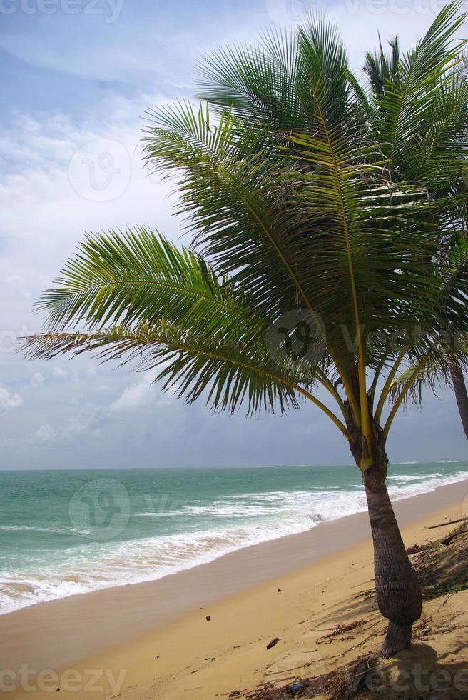 coqueiro na praia, tailândia foto