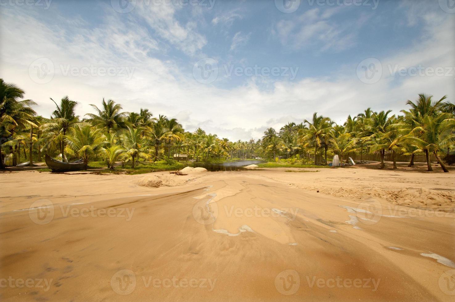praia virgem com palmeira foto