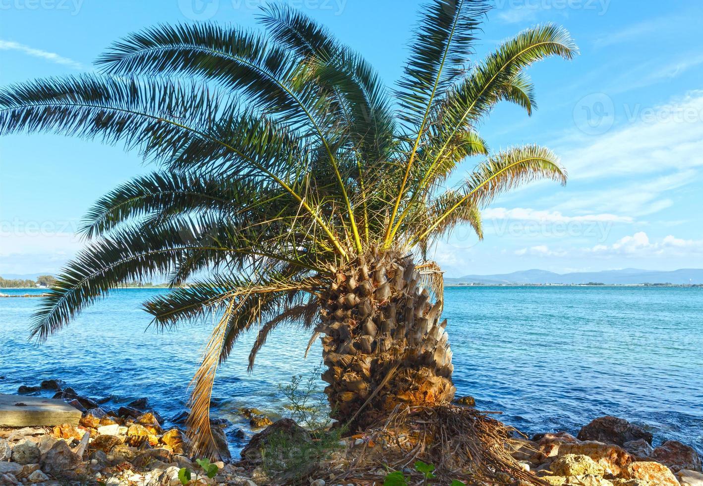palmeira na praia de verão (grécia) foto