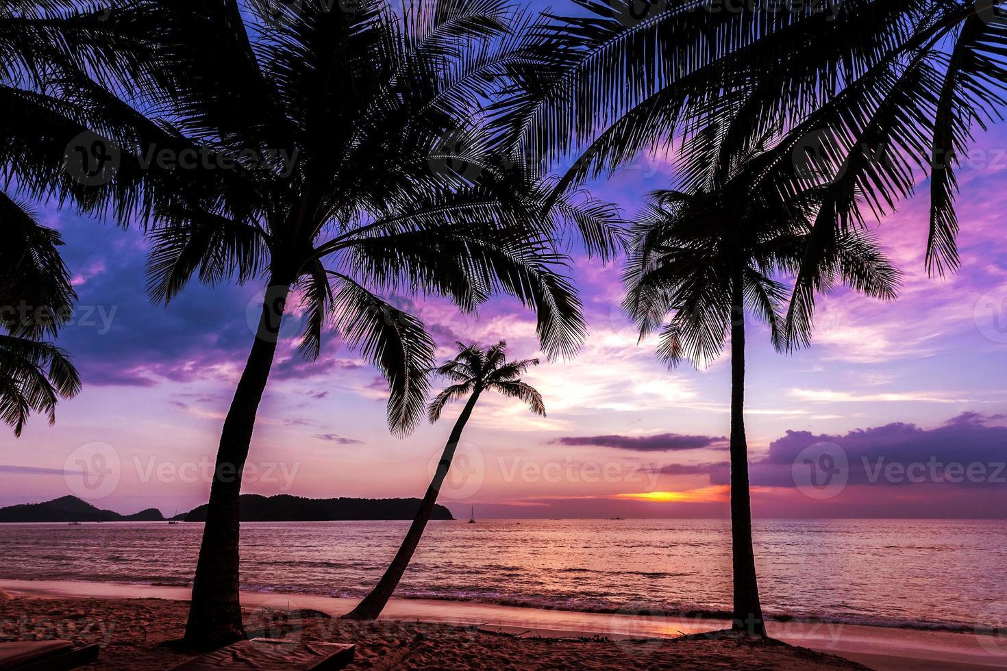 fundo de férias feito de silhuetas de palmeiras ao pôr do sol. foto