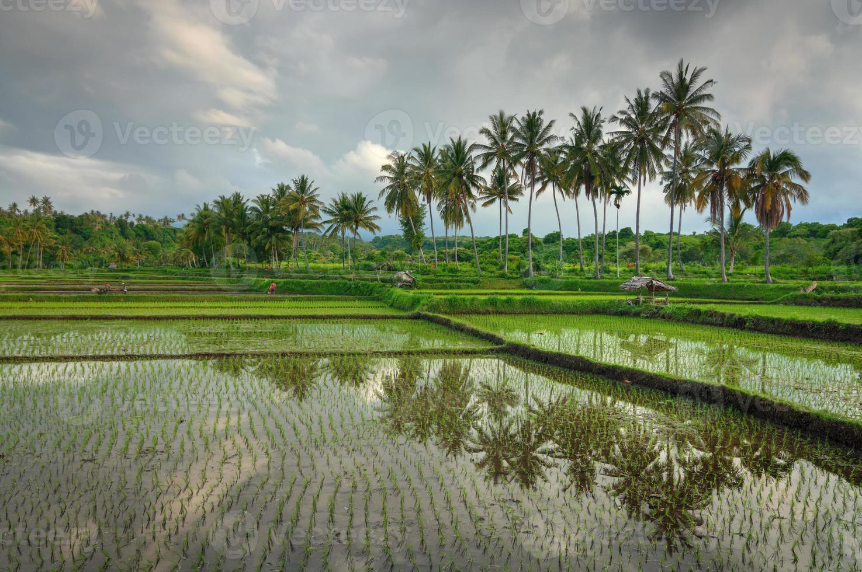 reflexo nos campos de arroz foto