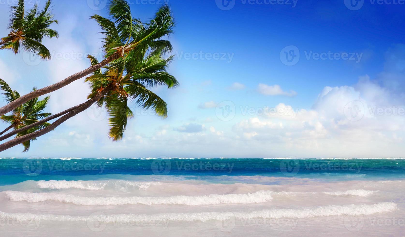 palmeiras verdes no Caribe. foto