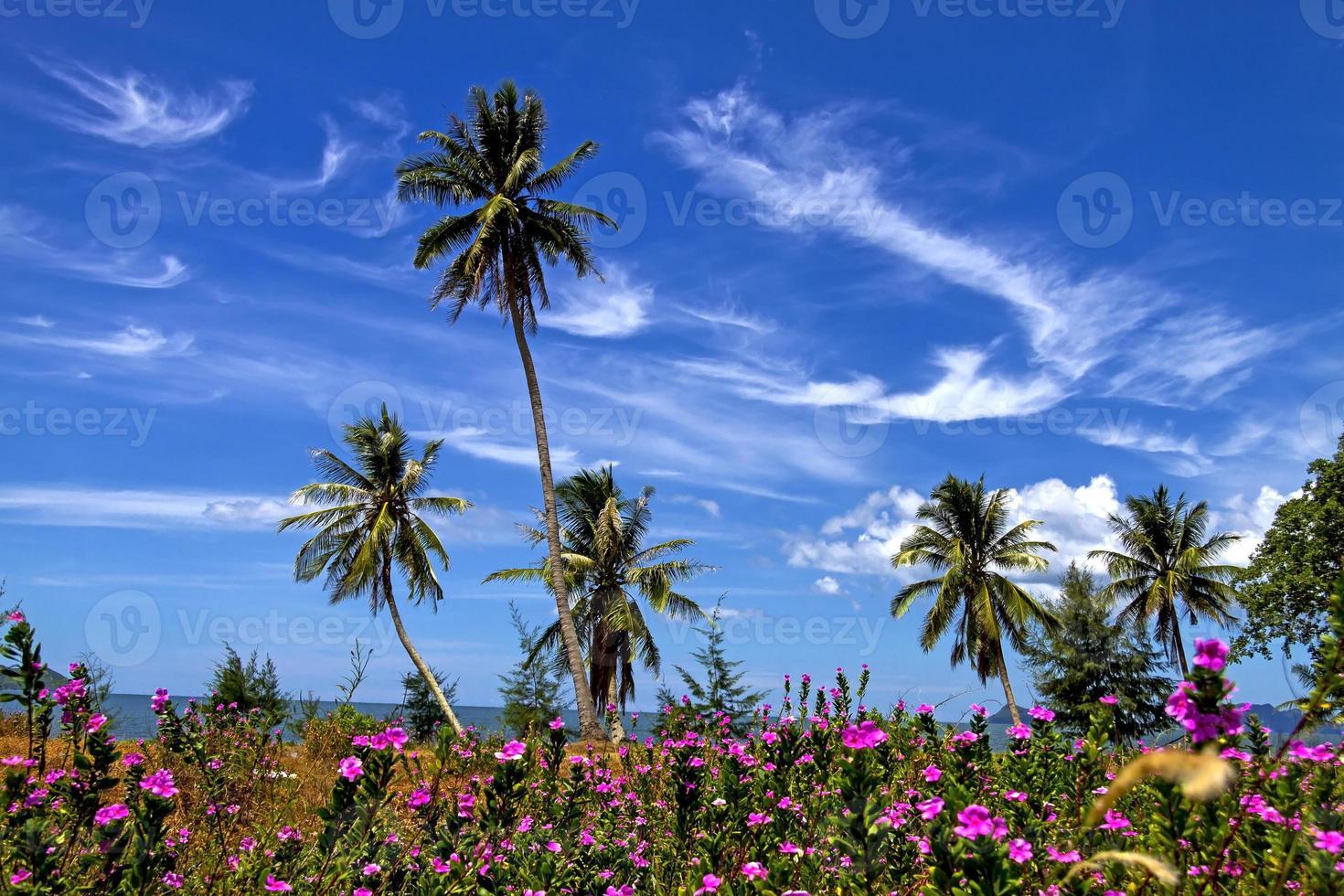 flor florescendo de coco foto