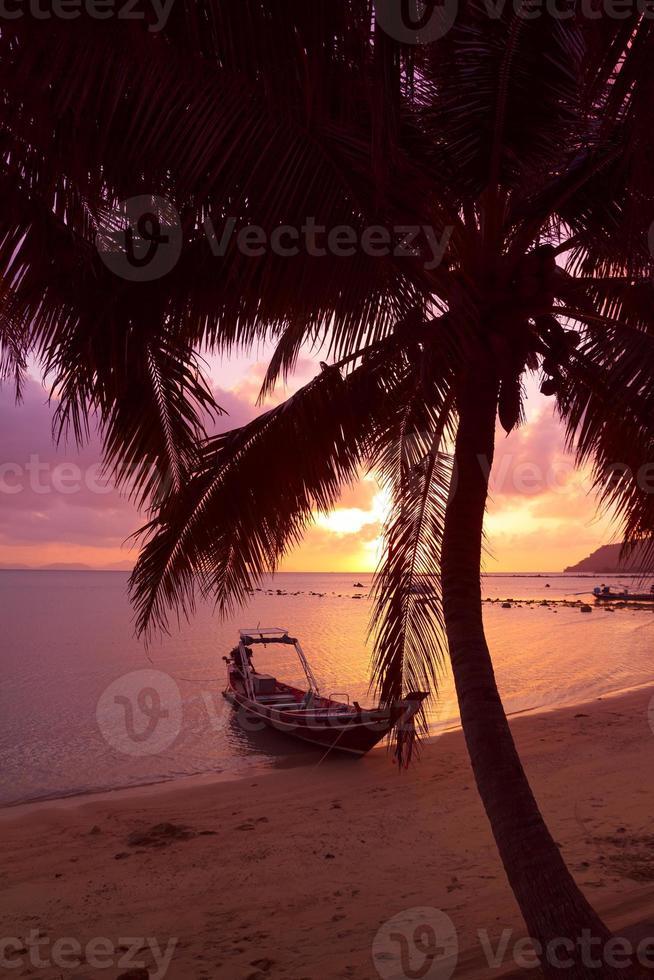 barco sob as palmeiras em praia tropical foto