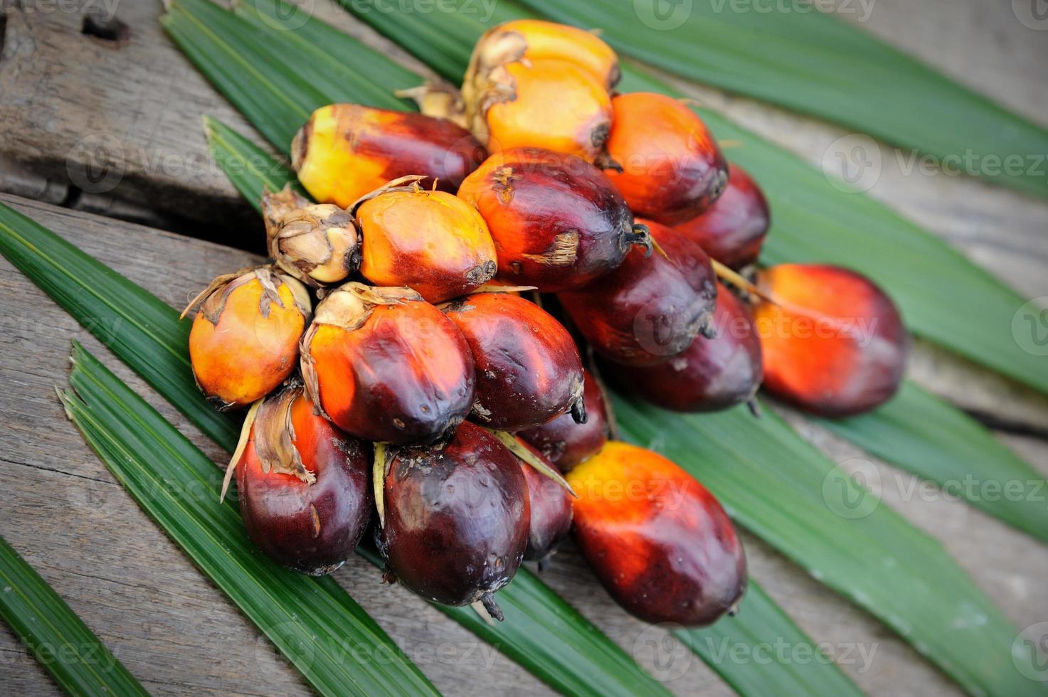 frutas frescas de óleo de palma foto