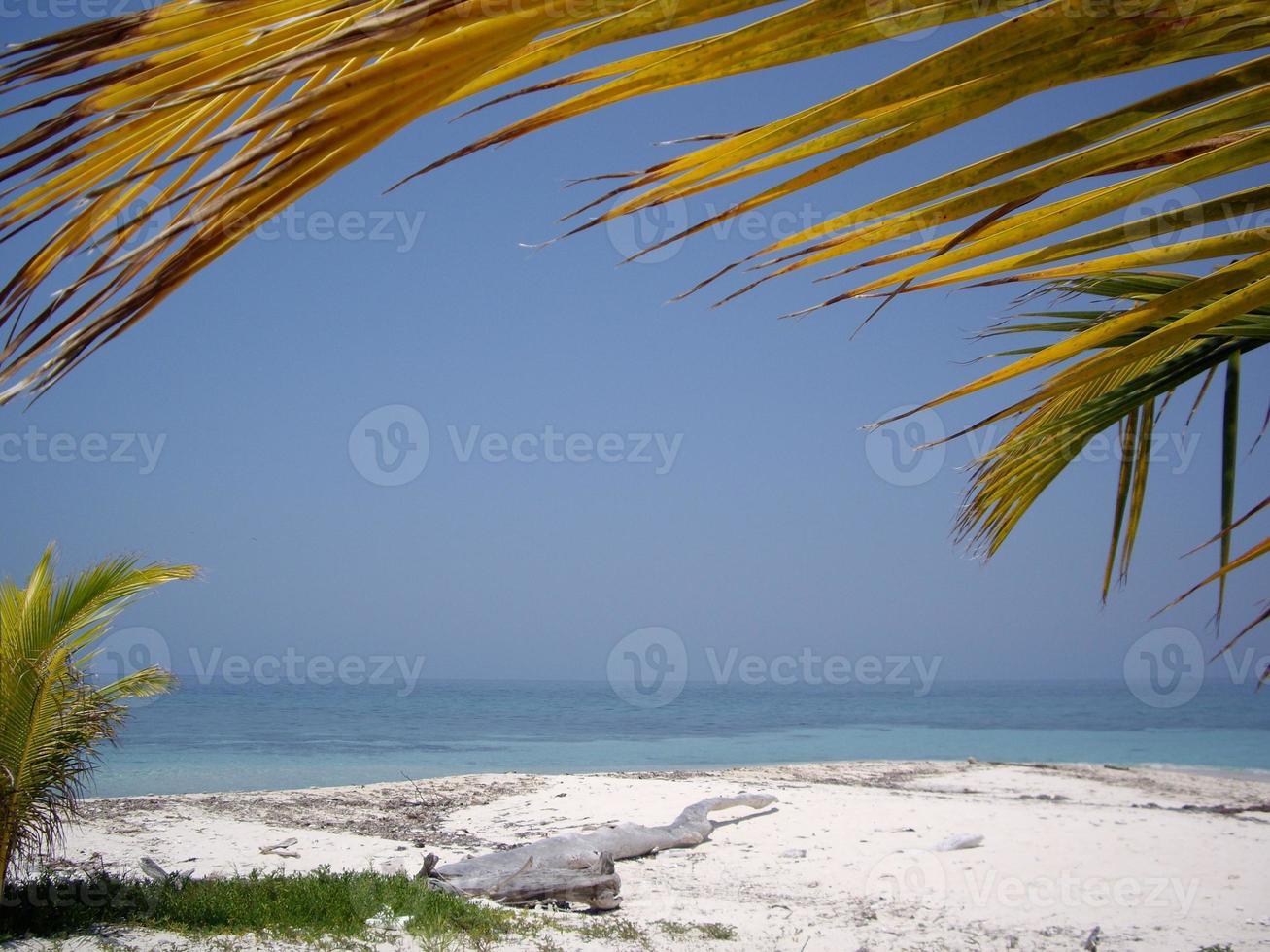 palmeira - areia tropical foto