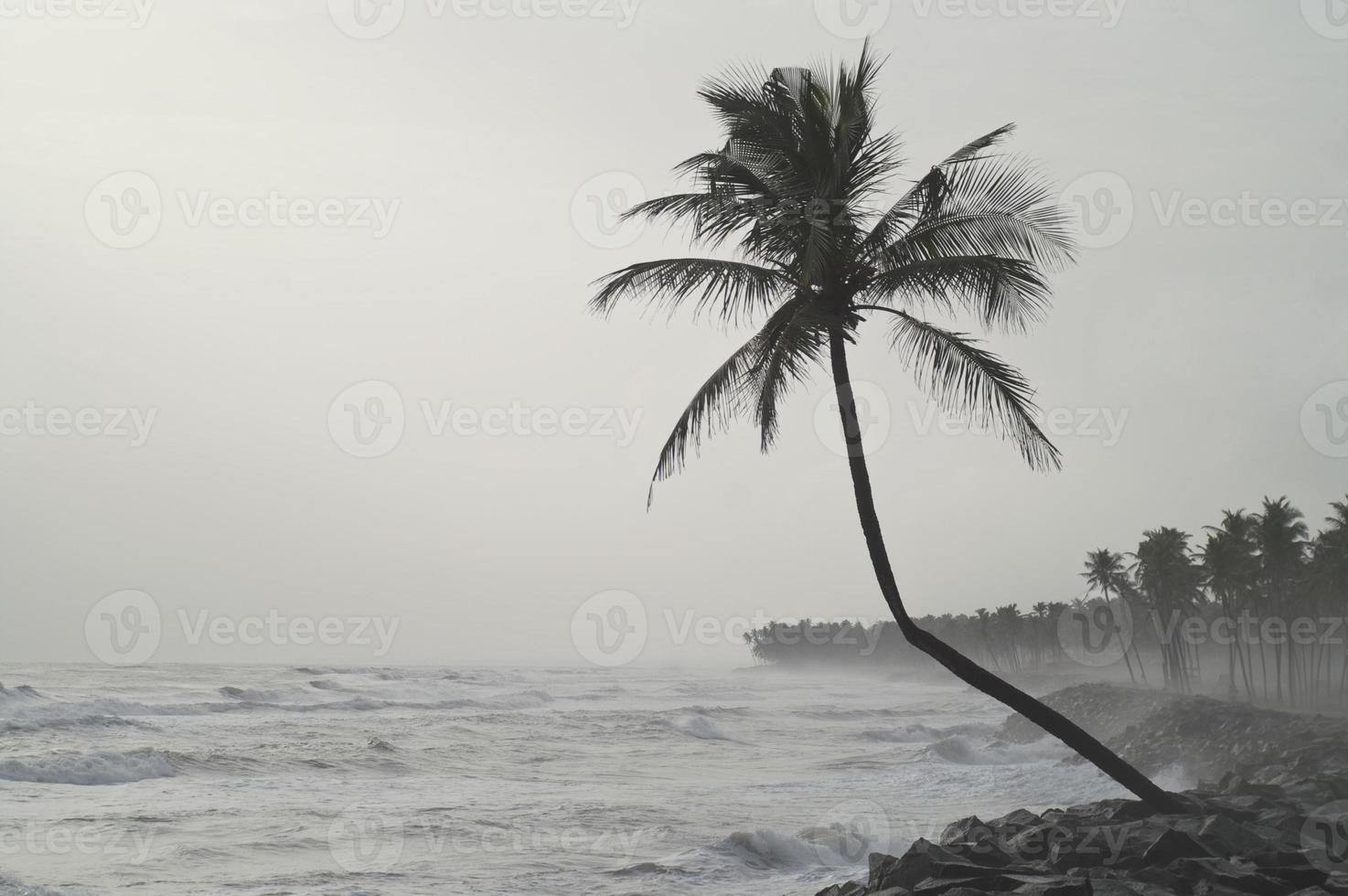 palmeira solitária enfrentando a tempestade foto