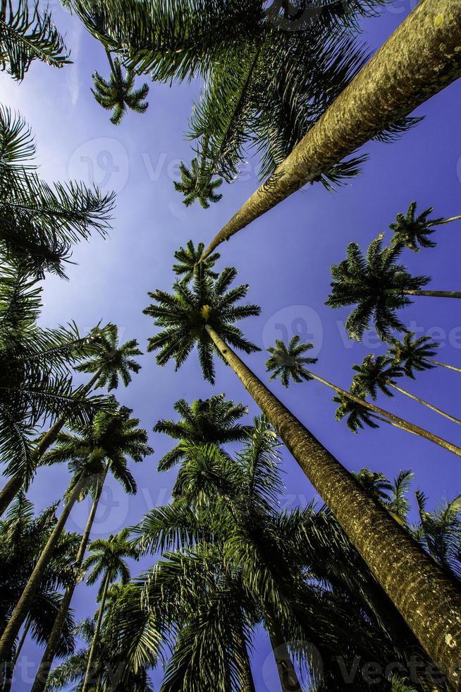 palmeiras 1 foto