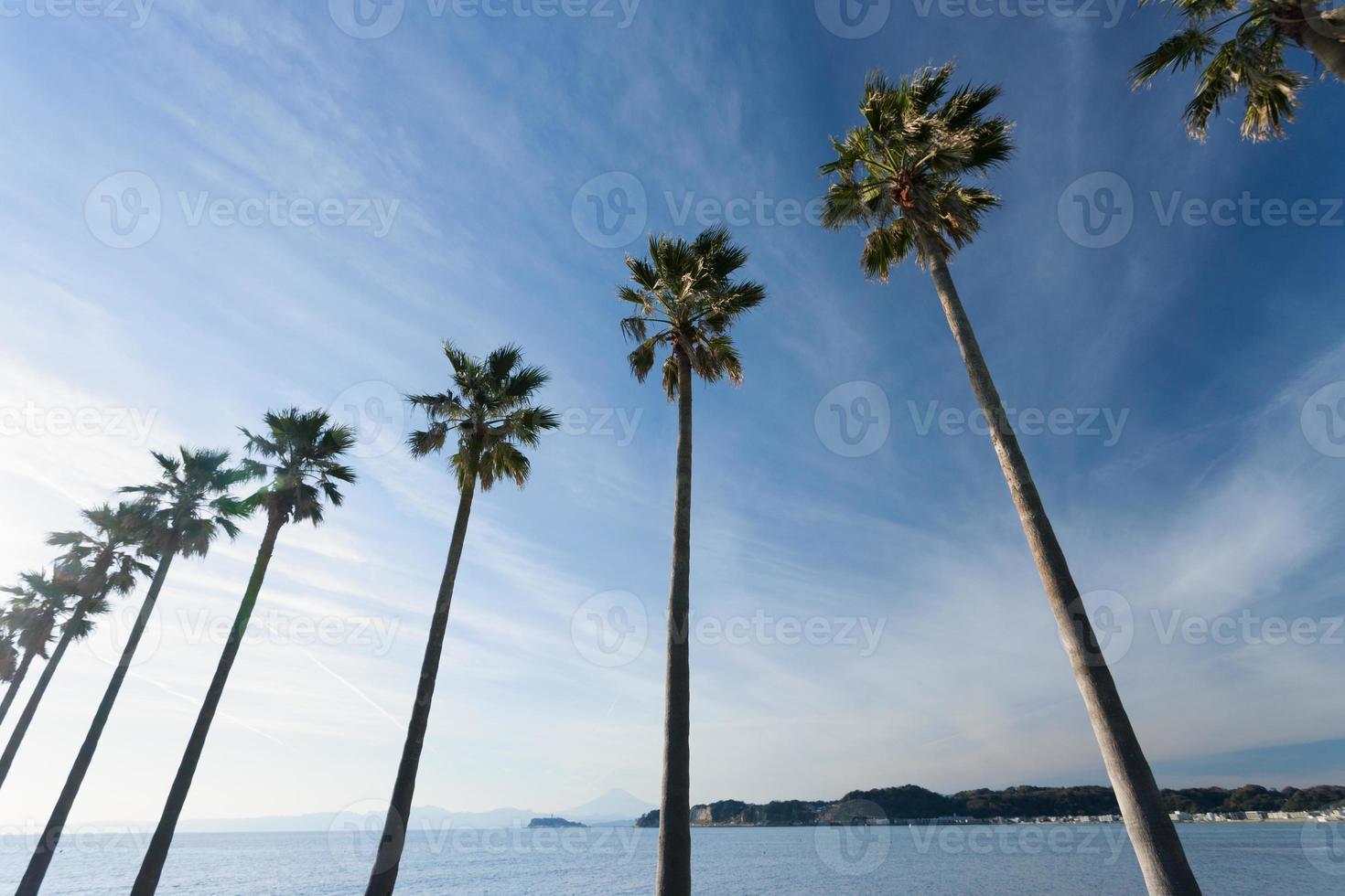 Shonan com palmeiras foto