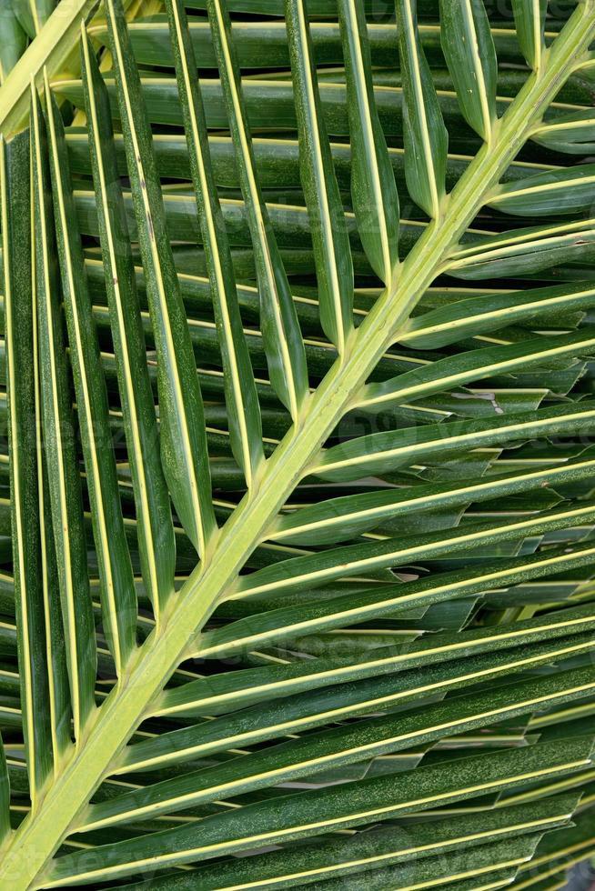 palmeira folhas de fundo foto