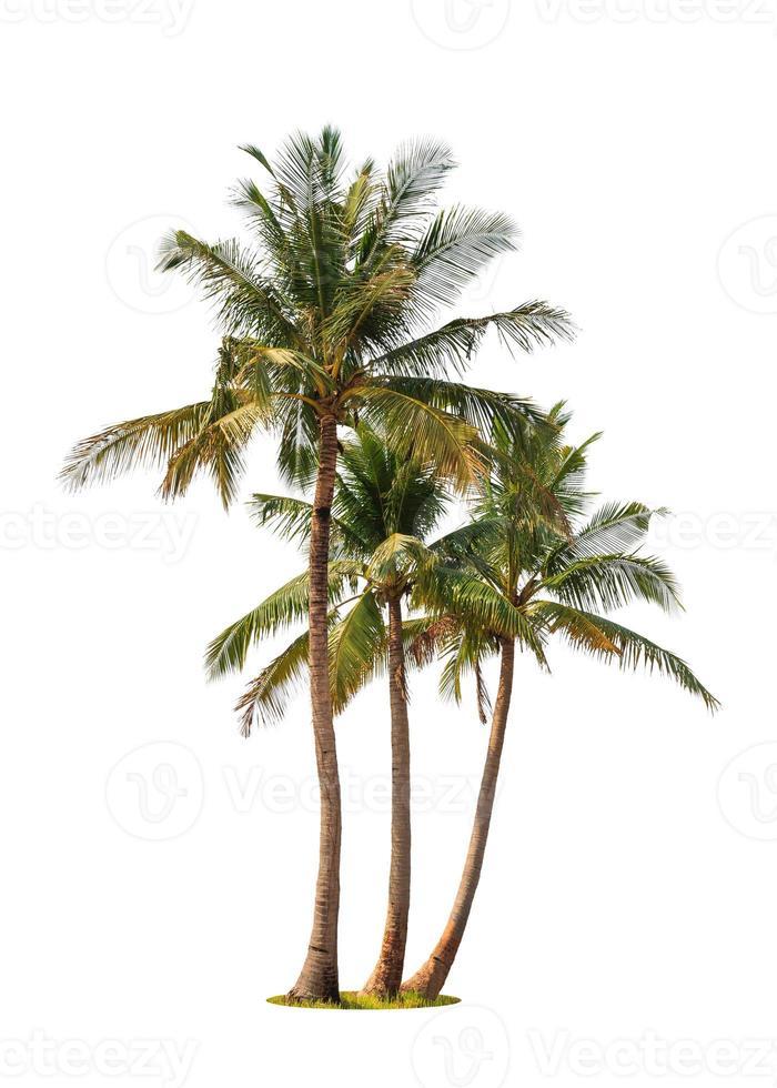 três coqueiros foto