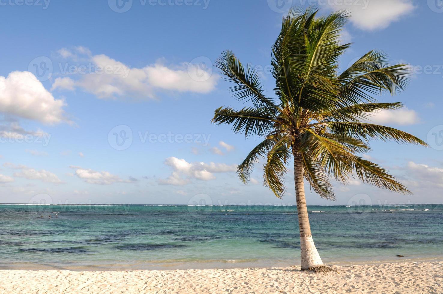 palmeira na praia foto