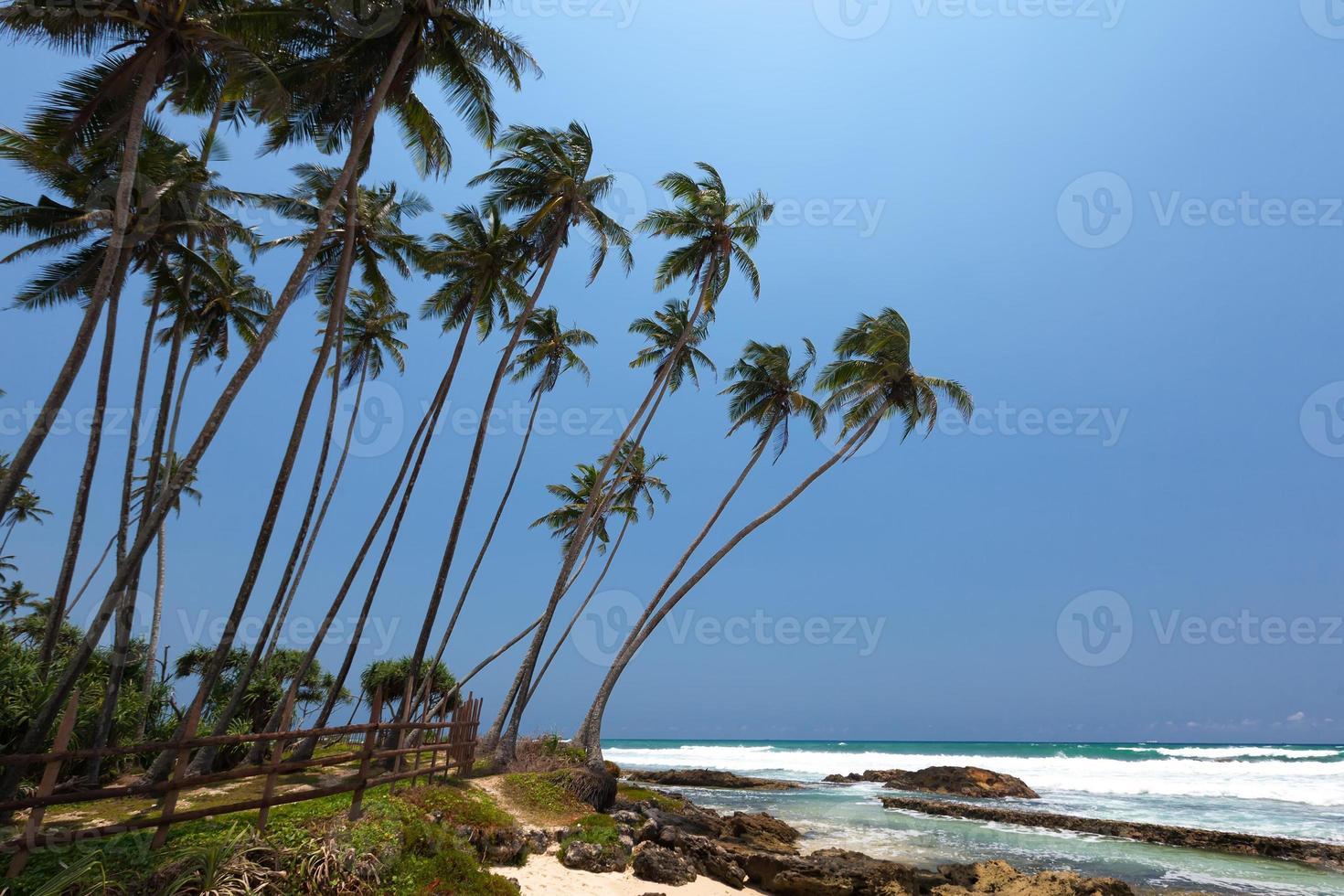 palmeiras na costa tropical do sri lanka foto