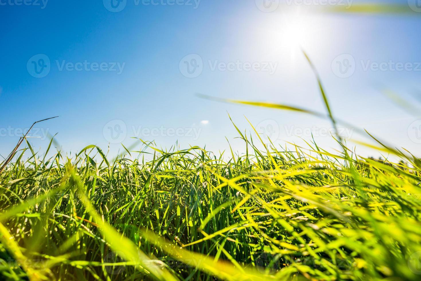 o sol do meio-dia brilha através da grama no prado foto