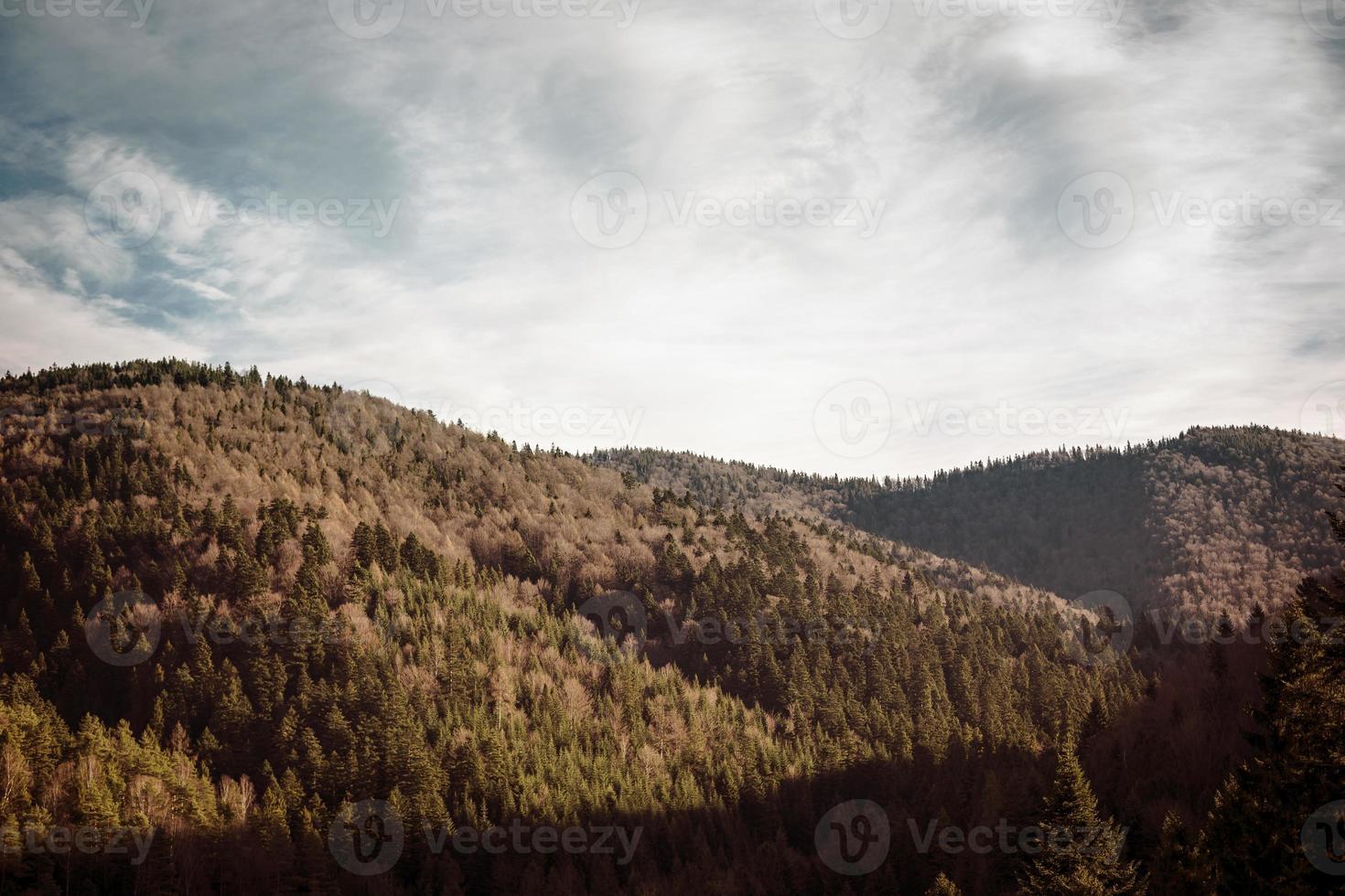 abetos, pinheiros forrest e paisagem de colinas na polônia. foto