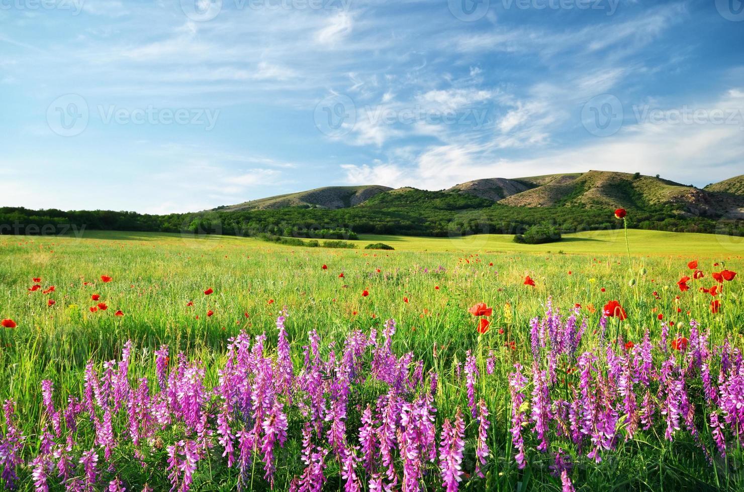 prado primavera foto