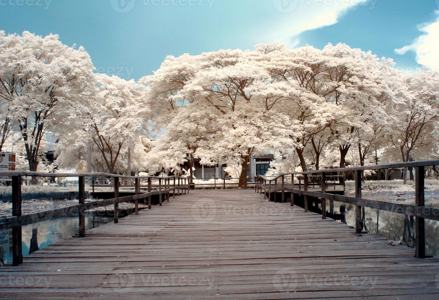 ponte de madeira com árvores de fundo foto