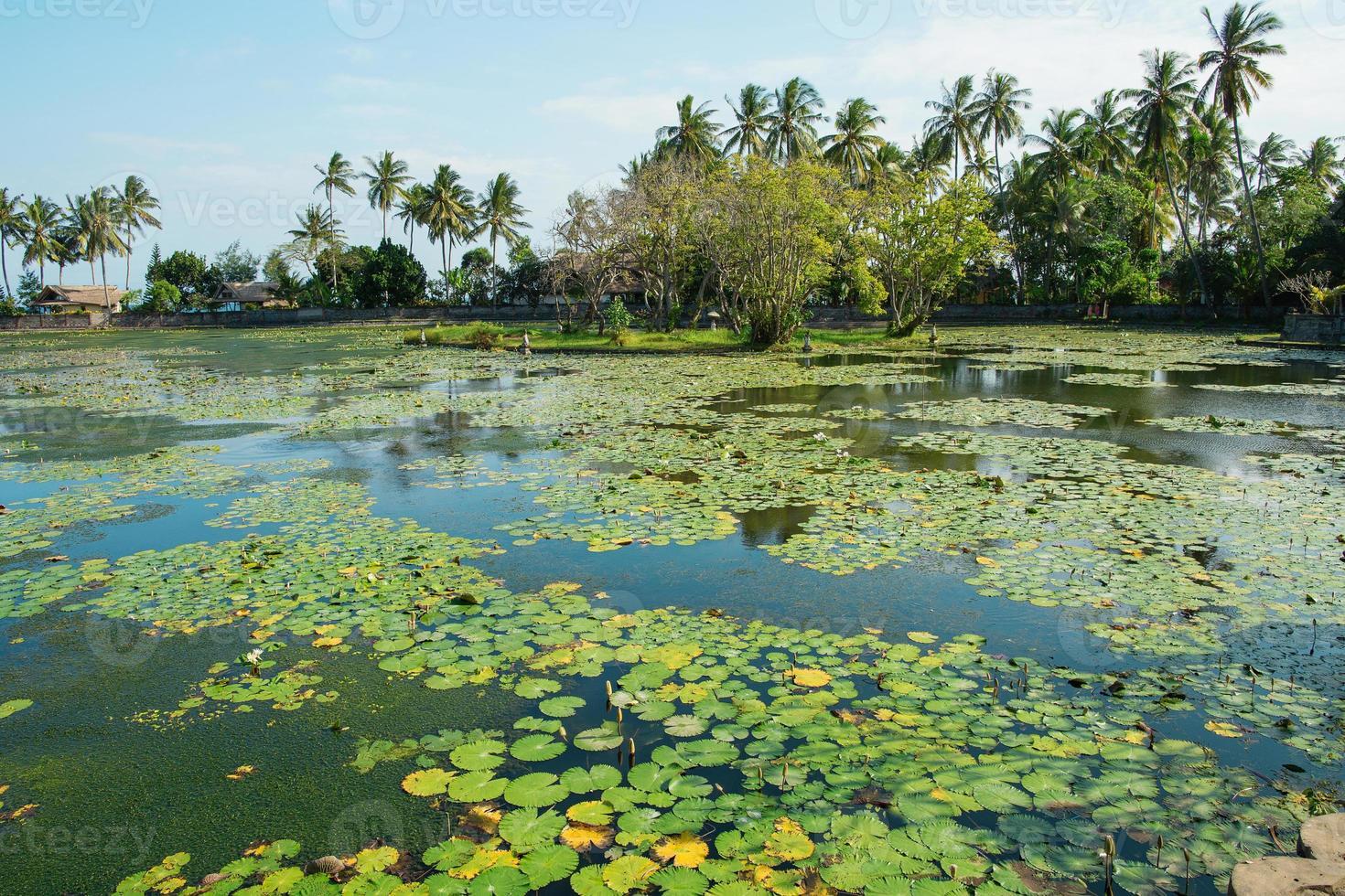 bela lagoa de lótus em candidasa, bali foto