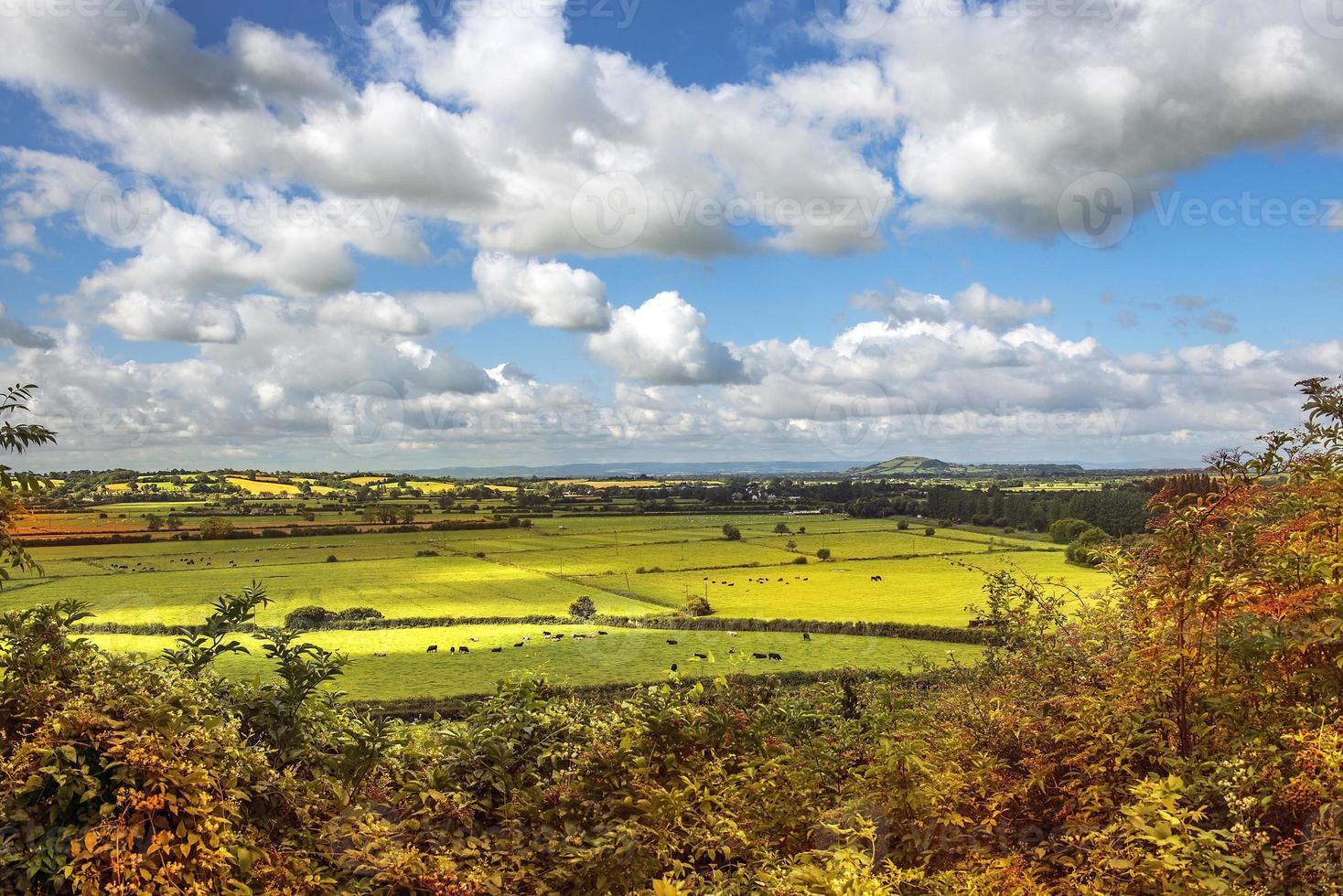 vista panorâmica rural de campos verdes, salisbury, inglaterra foto