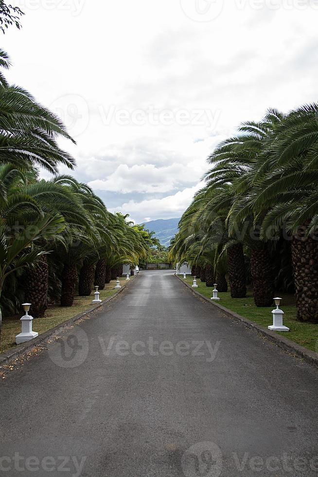 cocotier, rota, lampadaire, montagne, tropique foto