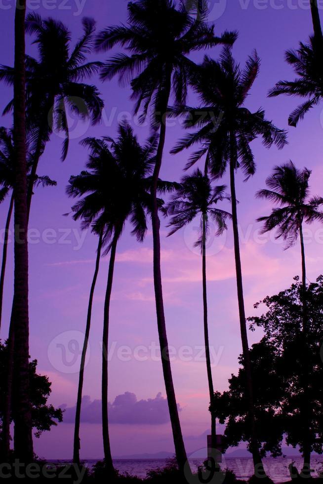 praia de coco foto
