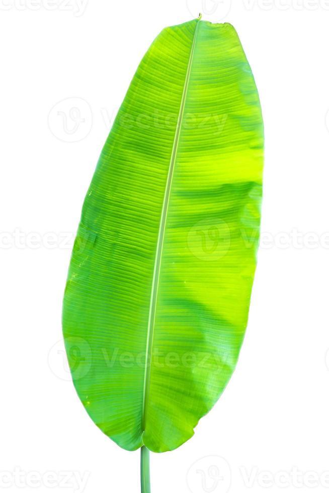 folha de bananeira isolada em um fundo branco foto