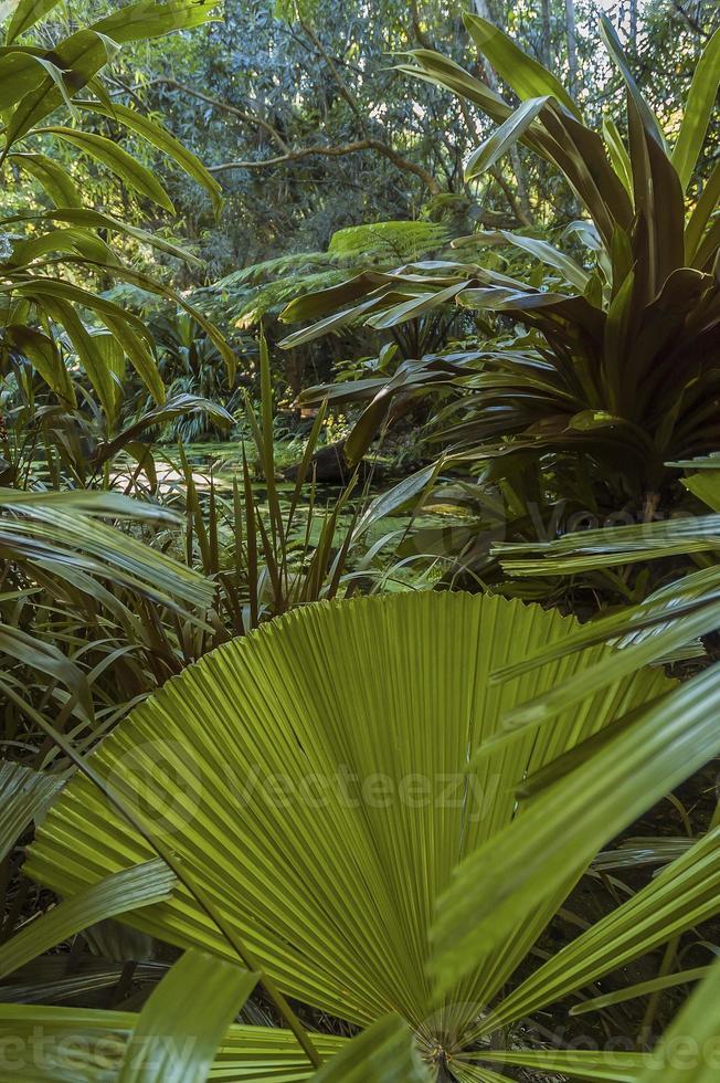 floresta tropical com piscina foto