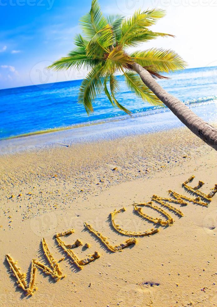 praia está escrito bem-vindo e palmeira sobre o oceano foto