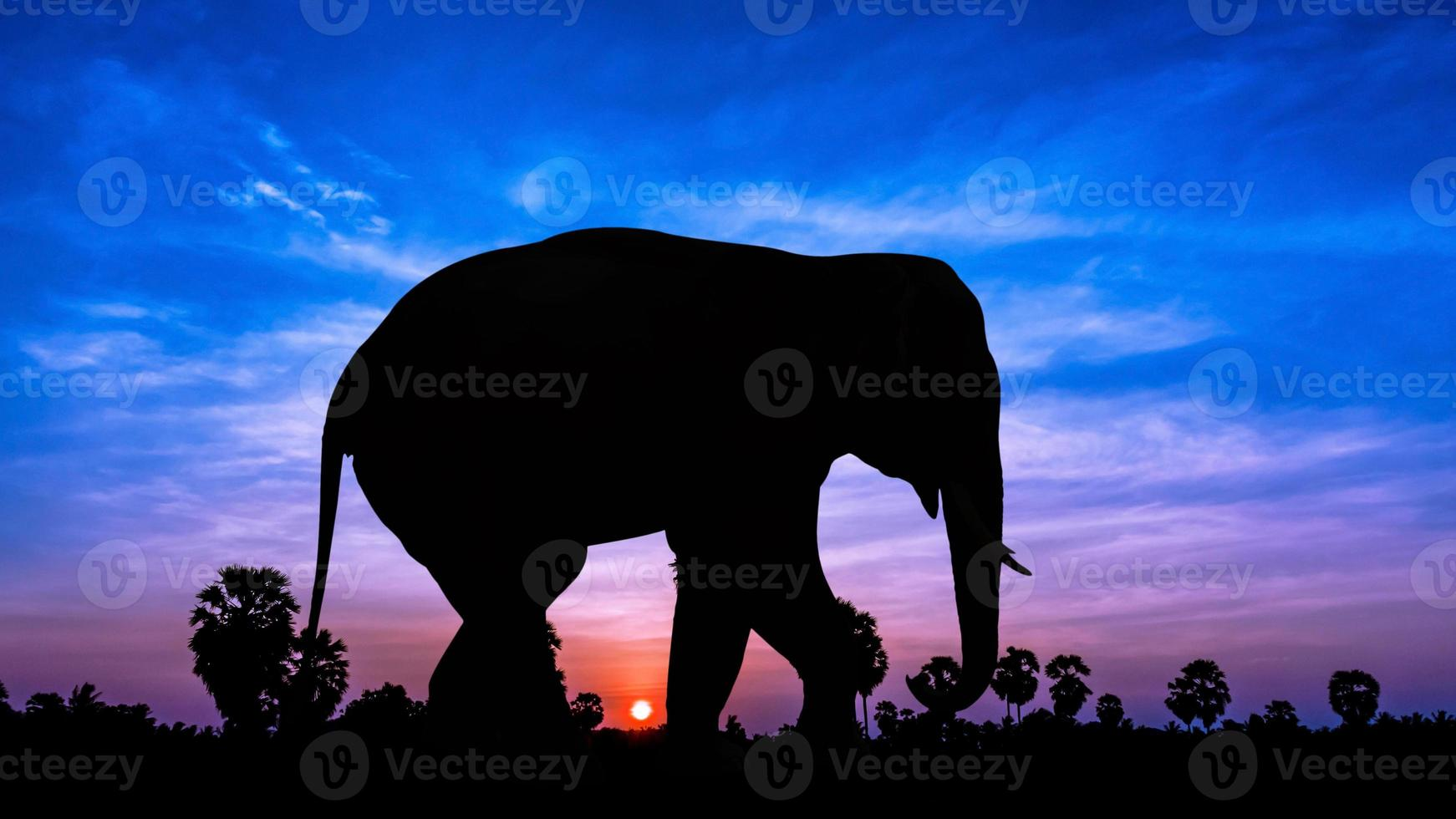 elefante e árvore de palmo na hora do crepúsculo foto