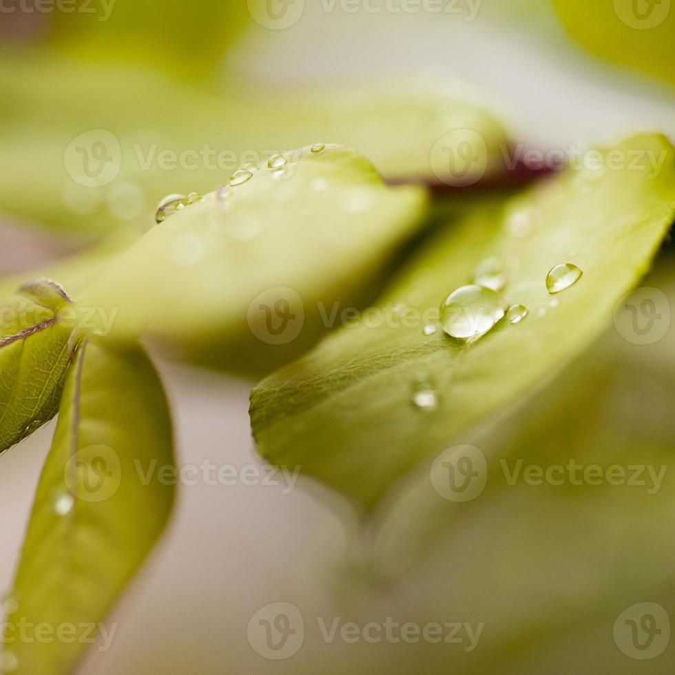 gotas de água nas folhas verdes ao ar livre foto